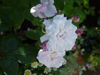 5.25 blushnoi-1.jpg
